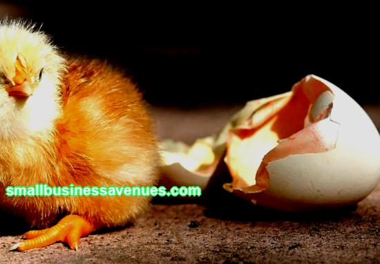 Egg incubation business