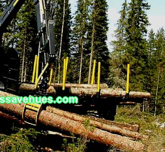 In the article I will touch upon the issues of the correctness of determining the structure of forestry business production, building process technology, educating the team; I will share the secrets from my own experience.