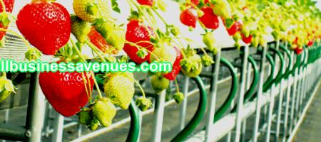 Business plan for growing strawberries all year round