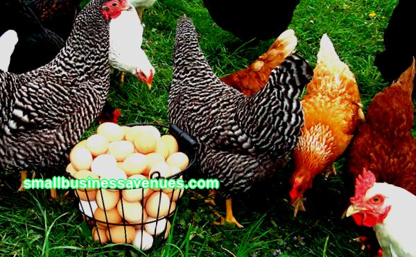 The grill chicken business plan is simple and fairly easy to organize even with a small budget. In the article you will find a plan for organizing such an enterprise and ...