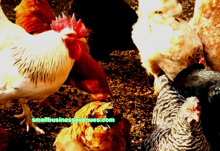 We offer a detailed business plan for chicken breeding. Here the costs of starting a business are presented, risks are taken into account and the financial result is calculated.
