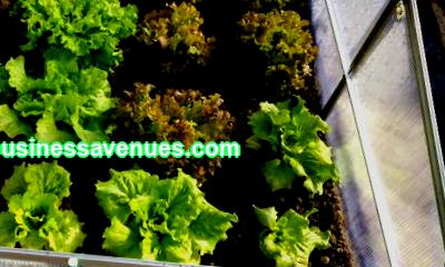 Greenhouse business plan - from experts