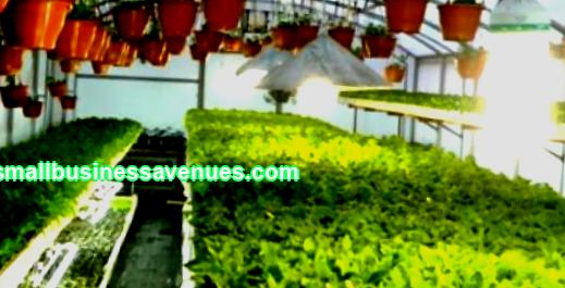 A ready-made business plan for growing greenery in a greenhouse