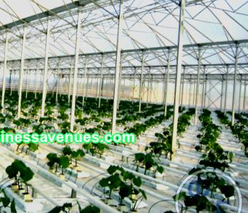 The main stages of building a greenhouse business business plan for aspiring entrepreneurs