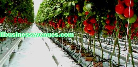 Nykyään monet kaupunkilaiset siirtyvät lähemmäs luontoa, maaseudulle. Monet menestyvät liikemiehet avaavat oman yrityksensä metropolin ulkopuolella ...