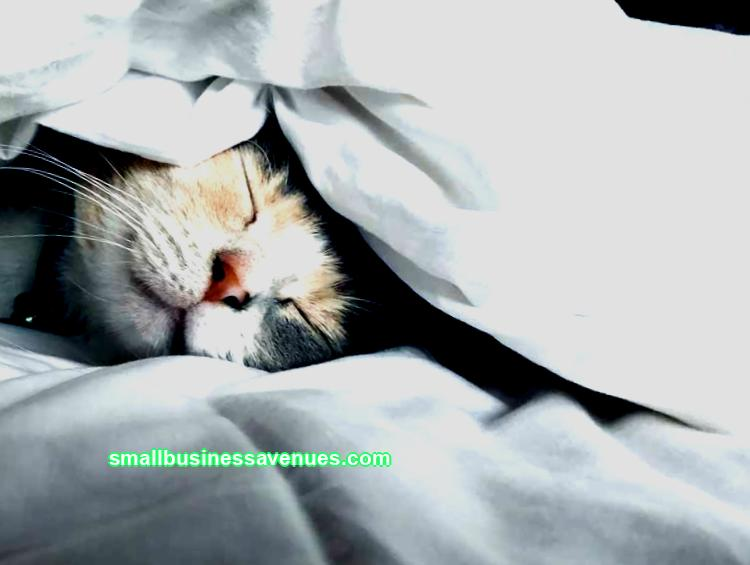 Business ideas for the lazy: 11 business options