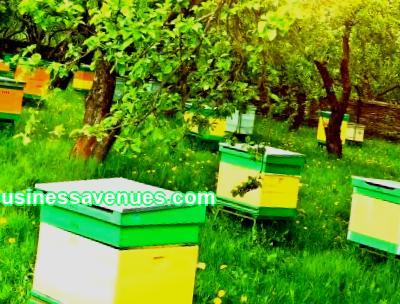 Plano de negócios de apicultura