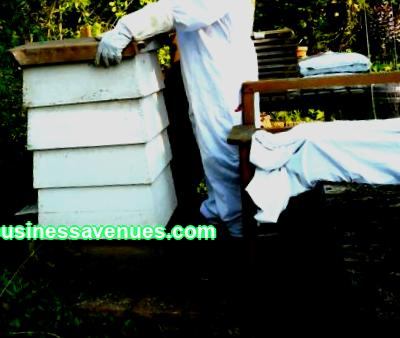 Are you looking for a beekeeping business plan? Are you thinking about how to become successful and carry out undertakings in this area? If so, you are on the right track. Beekeeping products are not only natural honey, but also pollen, propolis, wax, which are widely used for medicinal purposes.