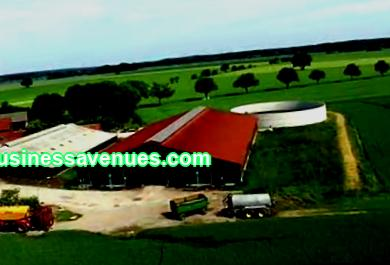 There are many parameters to consider when drawing up a farm business plan. The business plans for cattle breeding include the choice of direction: dairy or meat. You need to know where to build a barn, make calculations and much more. How to prepare for opening a dairy or meat farm - read the article.