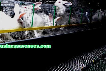Harkitse, minkälaisia eläimiä on kannattavaa kasvattaa yritykselle kotona, miten myydä niitä ja tarvitsetko toimiluvan.