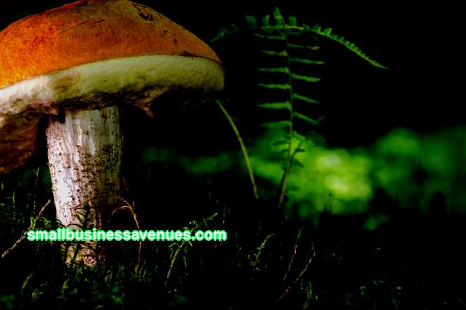 What is the oyster mushroom business. What is the cultivation technology. Pros and cons - arguments. Profitability. An example of a business plan.