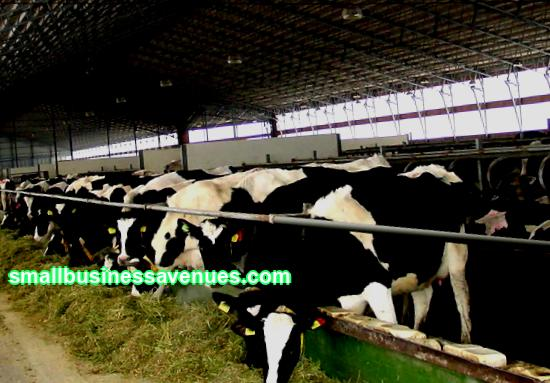 In this regard, the idea of launching a dairy cattle project seems very reasonable and promising. To successfully implement your plan, you need a quality dairy cattle business plan.