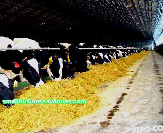 Livestock business plan