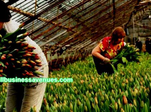 Καλλιέργεια χρώματα προς πώληση στο σπίτι: Επιχειρηματικό σχέδιο, σχόλια