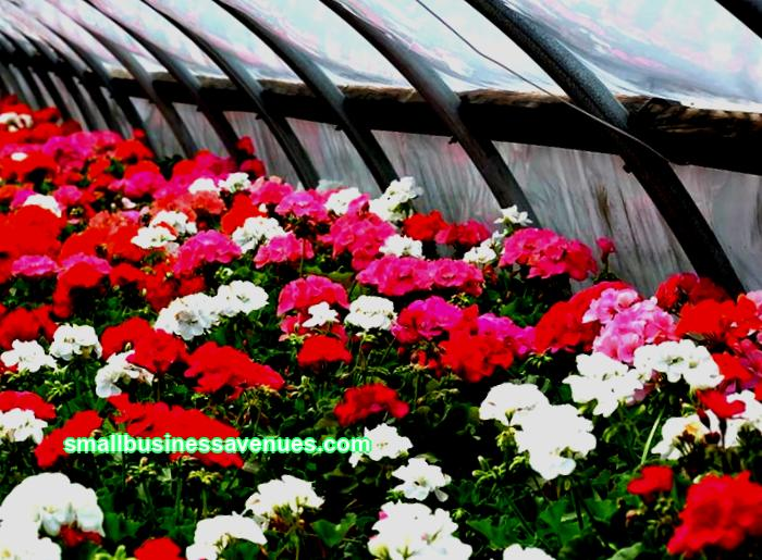 Growing flowers for sale at home is a great business for people in many cities around the world. Taking into account several features of this area, it will not be difficult to build a business model.
