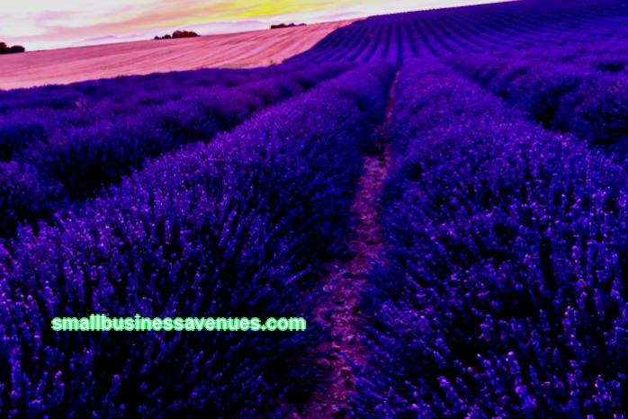Aiheet aiheesta: Huonekasvit yrityksenä, ammattikäyttöön tarkoitettujen kukkakauppiaiden kommentteina