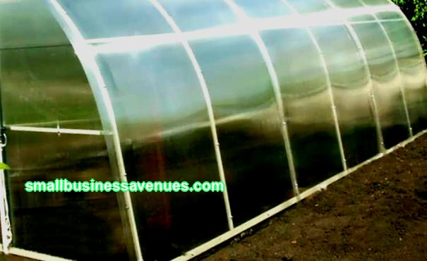 A winter greenhouse that grows vegetables, herbs and berries is a great business. It pays for itself in the first season. What to consider in a business plan and an approximate estimate.