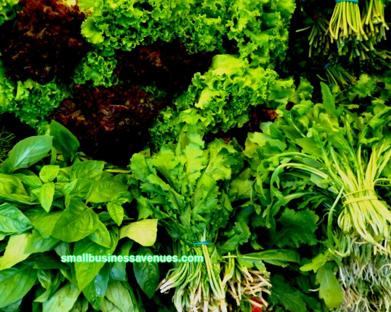 Ready business plan for growing greenery in a greenhouse. How much can you earn on greenery, how to grow greens in a greenhouse all year round, risk assessment and recommendations for the selection of equipment. Step-by-step instruction