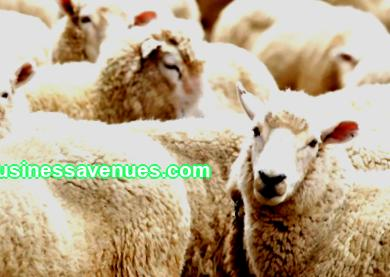 Let's talk with you today about ideas for the village. Read the animal husbandry business plan and start your own small business.