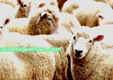 Puhutaan kanssasi tänään kyläideoista. Lue karjanhoitosuunnitelma ja perustaa oma pienyrityksesi.